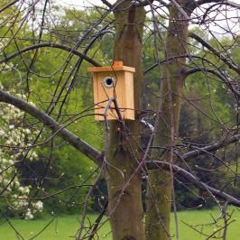 Ptačí budky z naší dílny