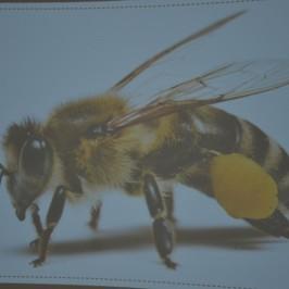 Návštěva včelího království